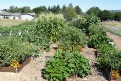 Garden as of 18 Aug 2013 1